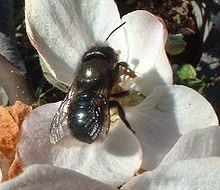 CATCH THE BUZZ – Grant Funded Urban Bee Project, Student Needed