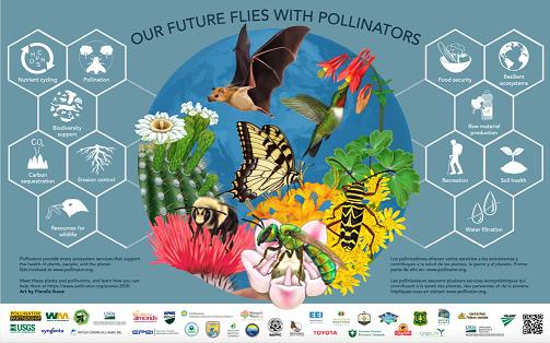 CATCH THE BUZZ – Pollinator Week