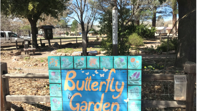 CATCH THE BUZZ – Pit Stop for Monarch Butterflies