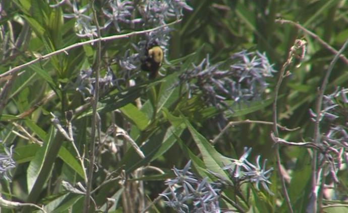 CATCH THE BUZZ – Community College Pollinator Garden
