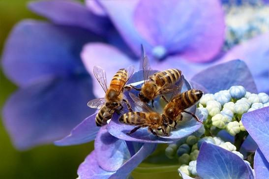 CATCH THE BUZZ – Befriending Bees
