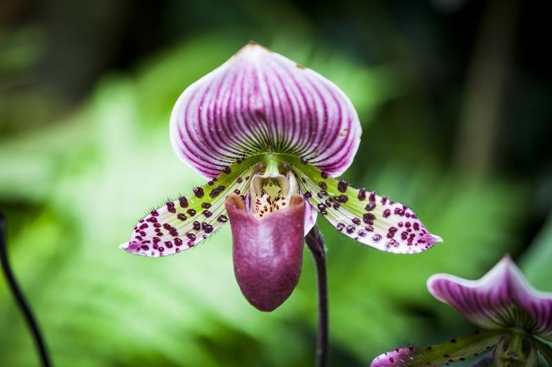 CATCH THE BUZZ – Orchid Pheromones Attract Pollinators