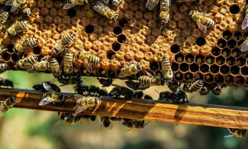 CATCH THE BUZZ – BIP Survey of Honey Bee Losses