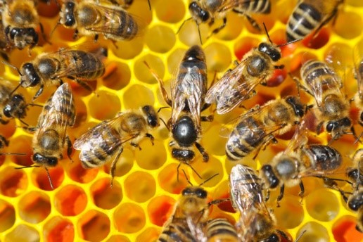 CATCH THE BUZZ – Honey as a Wound Treatment