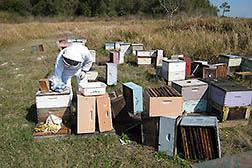 CATCH THE BUZZ – Honey Bee Cold Storage