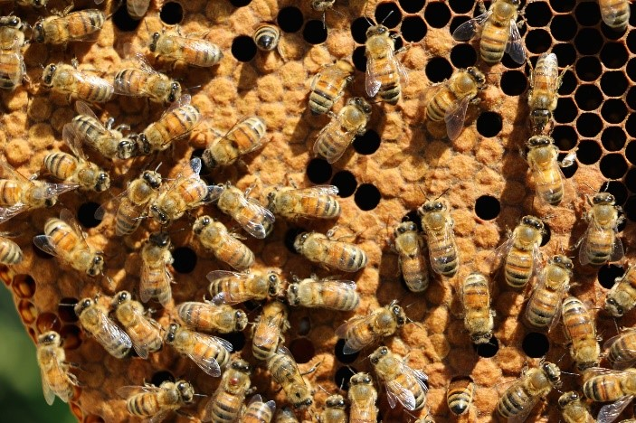 CATCH THE BUZZ – Neonics Found to Impair Honey Bee Growth
