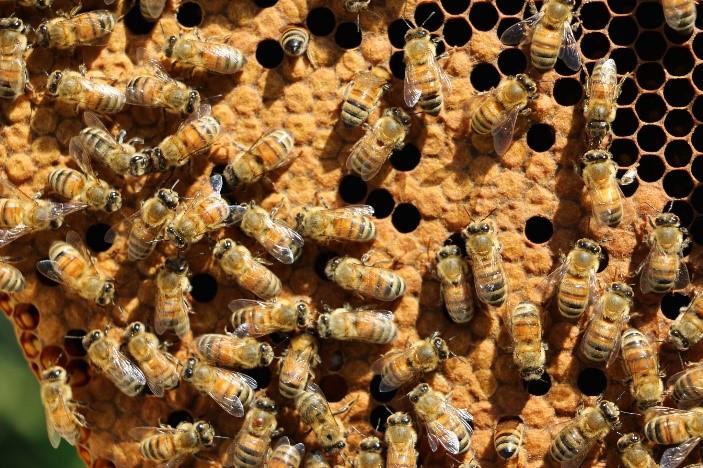 CATCH THE BUZZ – Neonics Found to Impair Honey Bee Growth