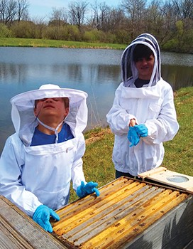 CATCH THE BUZZ – The Buzz on Urban Bees