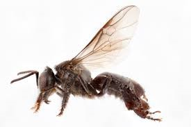 CATCH THE BUZZ- What Kind of Bee Is That?