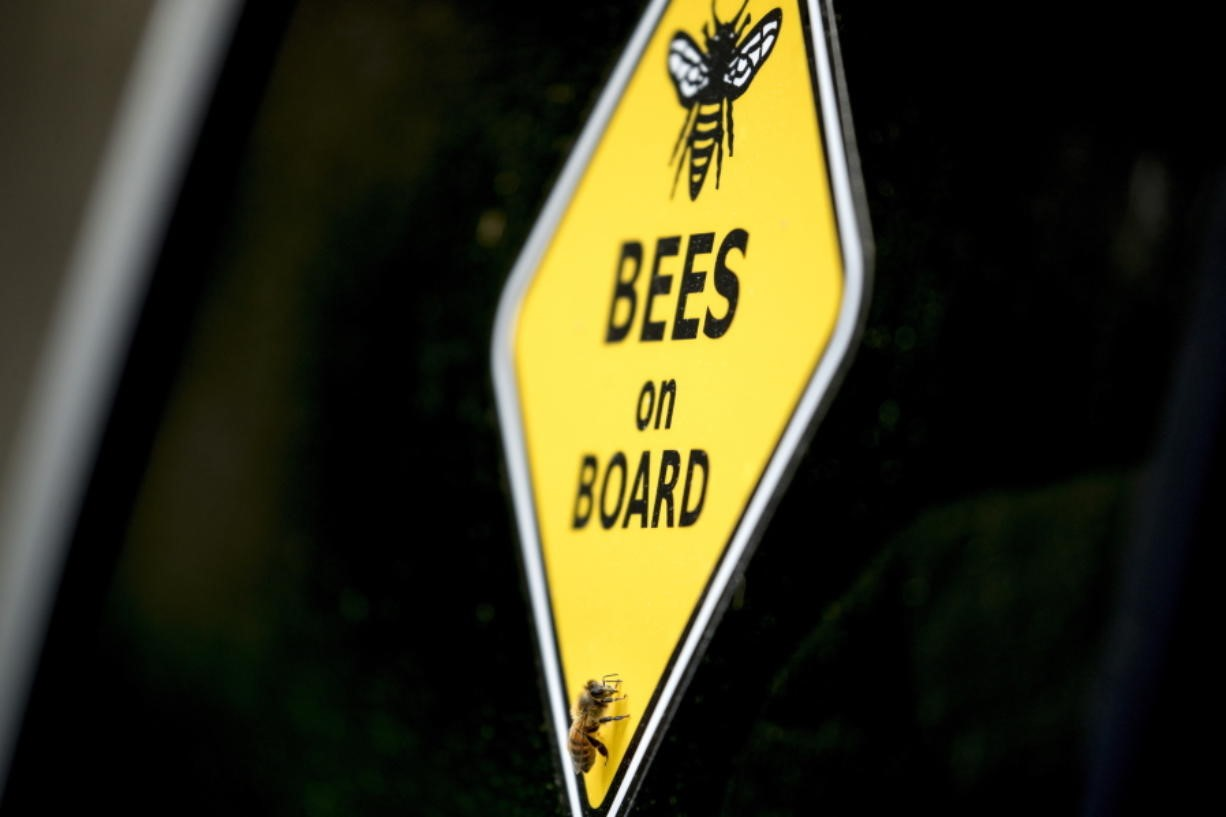 CATCH THE BUZZ – Beekeeping is an Essential Service