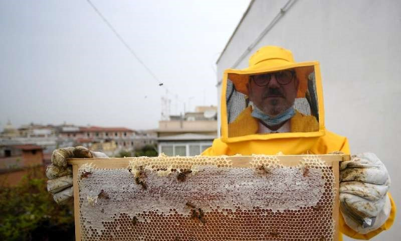 CATCH THE BUZZ – Happy locked down Roman Bees
