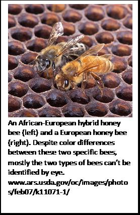 CATCH THE BUZZ- Gentle Behavior in Puerto Rican Honey Bees