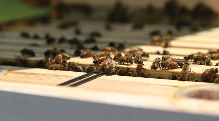 CATCH THE BUZZ – Veterinarians and Beekeepers
