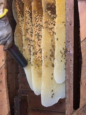 CATCH THE BUZZ- Tasty Honey Removed From 1800's Church