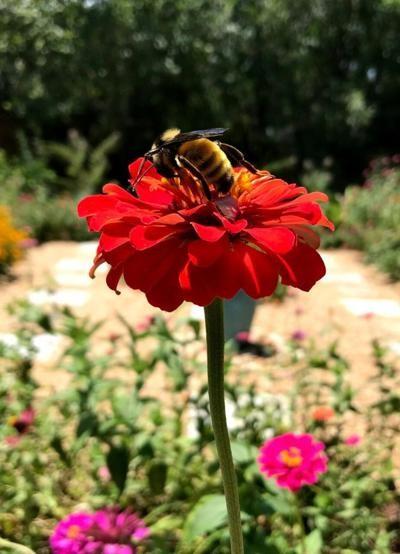 CATCH THE BUZZ- Great Georgia Pollinator Census