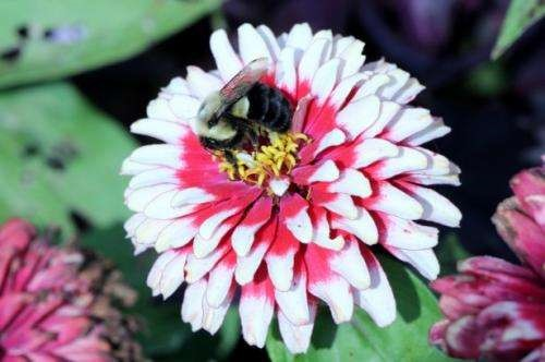 CATCH THE BUZZ – 94% of Wild Bee and Plant Species….