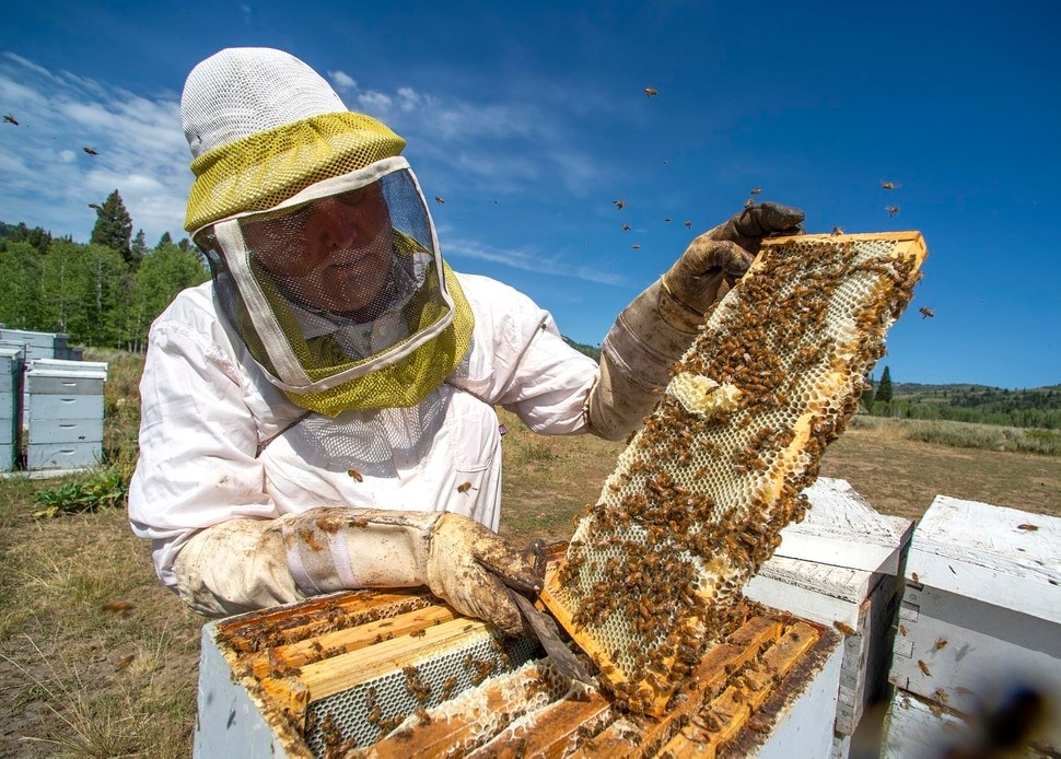 CATCH THE BUZZ – Block Honey Bees from Utah's National Forests