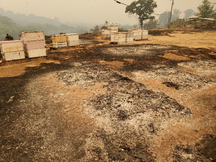 CATCH THE BUZZ- Beekeeper Fire Losses, Beyond Heartbreaking
