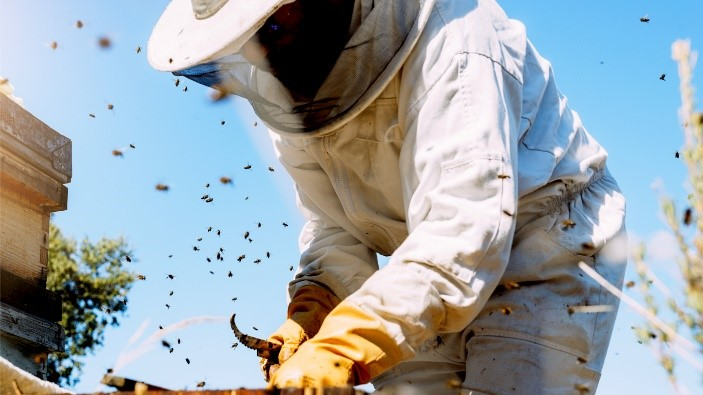 CATCH THE BUZZ- Get Paid to be a Beekeeper