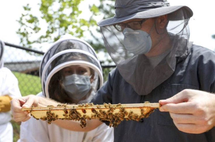 CATCH THE BUZZ – Veterinarians and Bees