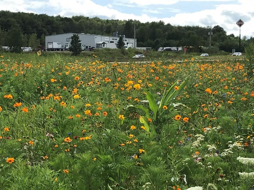 CATCH THE BUZZ- PennDOT Pollinator Gardens