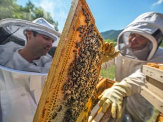 CATCH THE BUZZ- Fake Honey