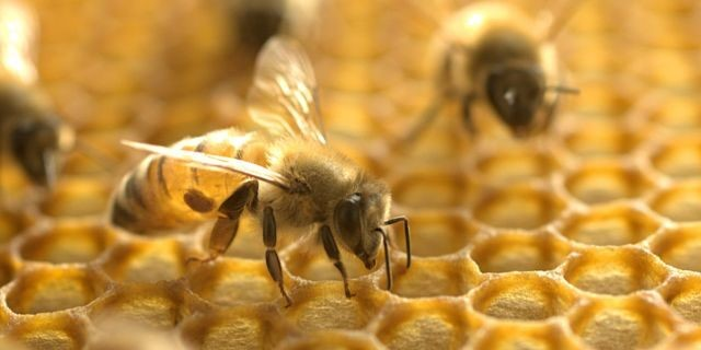 CATCH THE BUZZ – Honey Bee Venom Destroyed Breast Cancer Cells