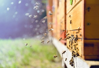 CATCH THE BUZZ- How do Honey Bees make Honey?