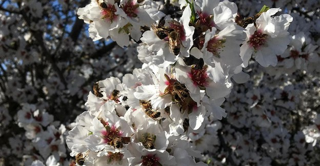 CATCH THE BUZZ- Honey Bees, Early to Bed, Early to Rise