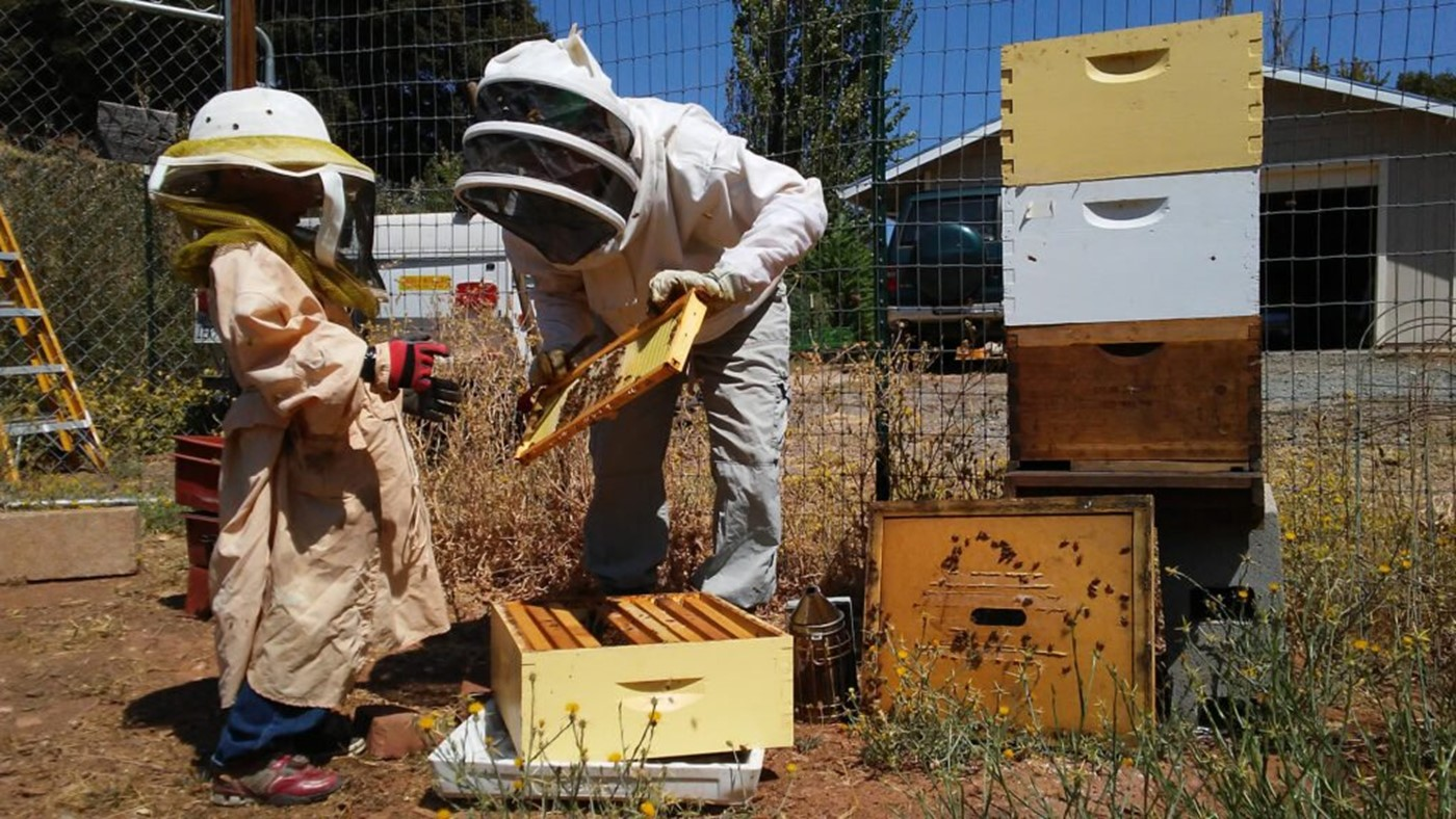 CATCH THE BUZZ- California First Master Beekeeper