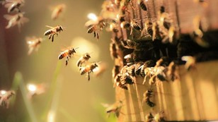 CATCH THE BUZZ- EPA Must Modify Agrochemical Regulatory Process to Protect Bees