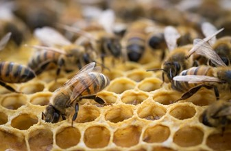 CATCH THE BUZZ – Beehive Project