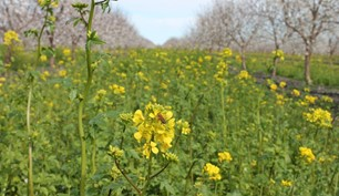 CATCH THE BUZZ- Soil Compacted? Look to Cover Crops