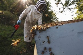 CATCH THE BUZZ – Crazy Beekeepers in Tough Times