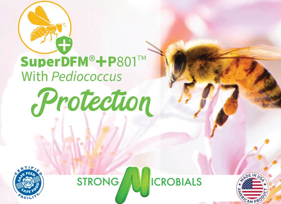 CATCH THE BUZZ- Pediococcus Acidilacti for your Bees