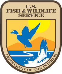 CATCH THE BUZZ- Monarch Listing with Fish and Wildlife Service