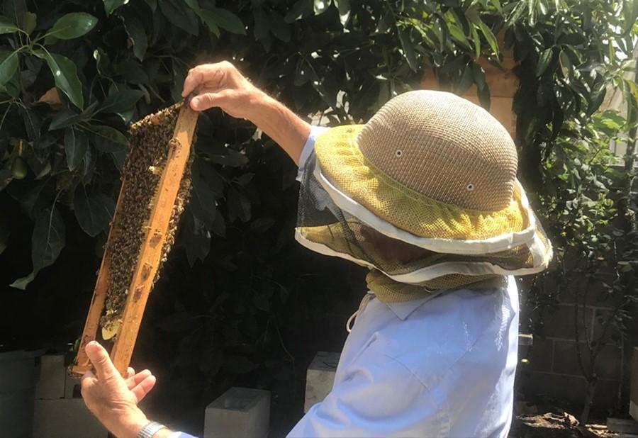 CATCH THE BUZZ- Backyard Beekeeping