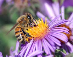 CATCH THE BUZZ- Global Decline of Insects