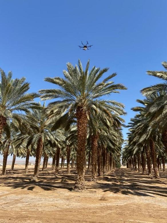 CATCH THE BUZZ- Israeli Pollinator Drones.
