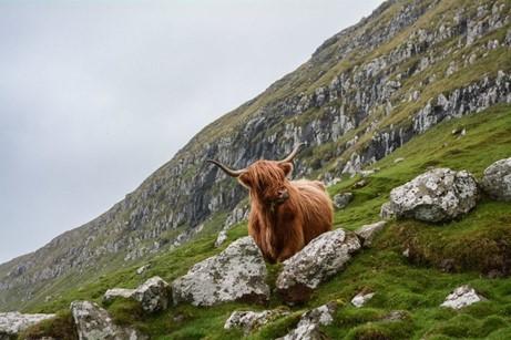 CATCH THE BUZZ- Scotland's Plan to Boost Biodiversity