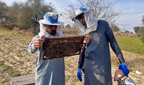 CATCH THE BUZZ – Pakistan Honey Production is Growing