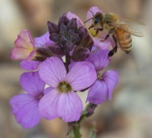 CATCH THE BUZZ – Haagen-Daz Honey Bee Haven