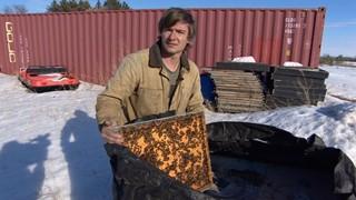 CATCH THE BUZZ- Seasonal Honey Bee Workers, Canada