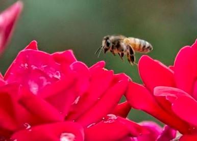 CATCH THE BUZZ- 'Bee' Kind, Planta Pollinator Garden This Year