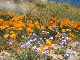 CATCH THE BUZZ – Why Plant Diversity is Important.