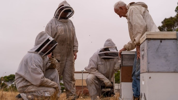 CATCH THE BUZZ – Desperately Trying to Keep Honey Bees Alive on Kangaroo Island