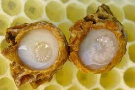 CATCH THE BUZZ- Royal Jelly is not the Whole Story