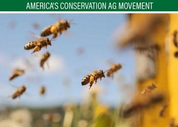 CATCH THE BUZZ – Pollinator Habitat Fits Farmer