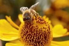 CATCH THE BUZZ- North Dakota Honey Production