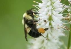 CATCH THE BUZZ- Green Bay, 'Bee City USA'